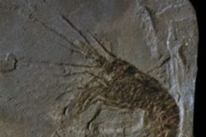 62 milyon yıllık timsah fosili bulundu.11024