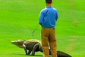 Golf turnuvasına davetsiz misafir.10667