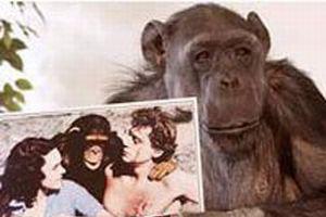 En meşhur maymun