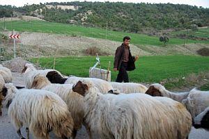 Çoban su kanalında can verdi.17190