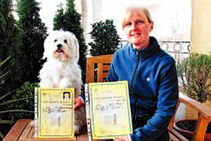 Yabancı dil öğrenen sertifikalı köpek.18734