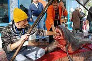 Mersinli balıkçılar köpek balığı yakaladı.20572