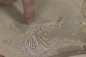2 bacaklı yılan fosili bulundu.8331