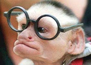 Türkiye'nin ilk şempanze doğumu.13430