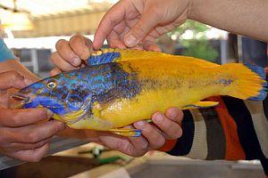 Fenerbahçeli balık tutuldu!.15111