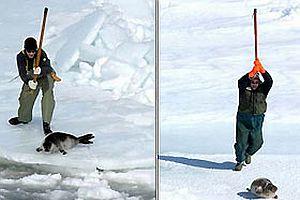 Sopayla fok avının yasaklanması istendi.14189