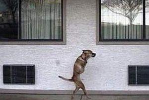 İstanbul'un köpekleri kitaplaştı.13116
