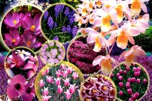 Çiçekler sevgiliye ne söylüyor?.76535