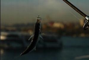 Vatandaş, Galata'da veya Boğaz'da balık tutamayacak.29368