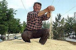 Buğdayın gen haritasında yeni gelişme.23881