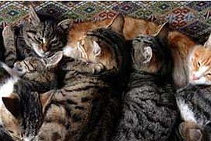 Evden tam 117 kedi çıktı.18741
