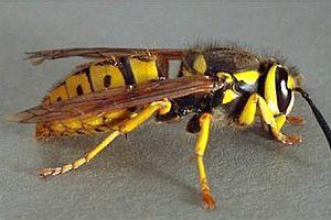 Türkiye'deki 'eşek arıları' İngilizleri soktu.14173