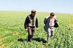 Kuruyan Akşehir Gölü tarım arazisi olarak kullanılıyor.49578
