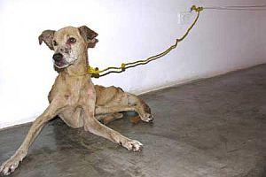 Sanat adına köpek öldürüyor!.10942