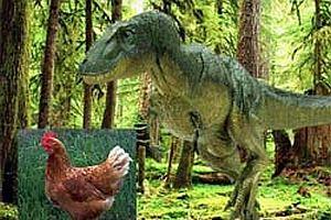 Tavuklar ve dinozorlar akrabaymış.23255