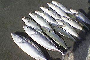 Balığın da defolusu çıktı.17272