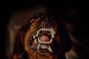 Köpekler 5 aylık bebeği parçaladı.7167