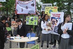 Sokak köpekleri için imza kampanyası.20659