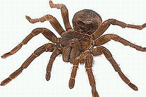 Örümceklerin iletişimi.16311