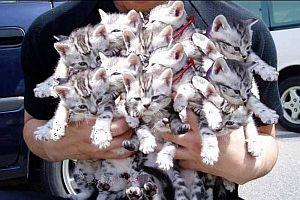 Kedileri çorba yapacaklardı.21471