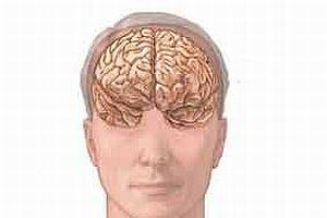 İnsan beyninin şifreleri çözülüyor.8096