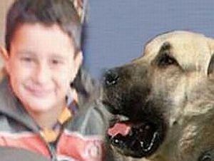 Köpek 5 yaşındaki çocuğu öldürdü.12552