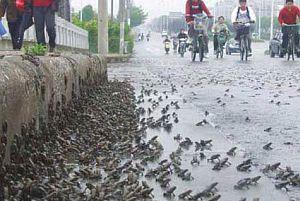 Çin'deki 7.8'lik depremden önce kurbağalar kaçmış.20517