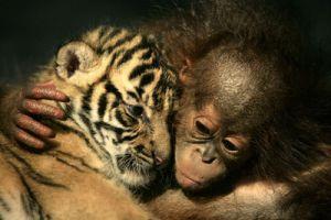 2007 yılı Dünyanın en iyi fotoğrafları belirlendi FOTO.39590