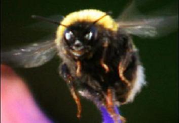 Bir arı gülümseyebilir mi?.10491