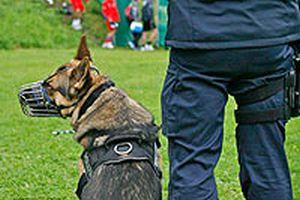 Hollanda'da polis, Türk yolcuları köpeklerle aradı.16787
