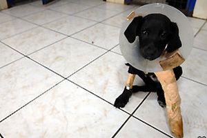 Trafik kazası geçiren kedi ve köpek kurtuldu.12795