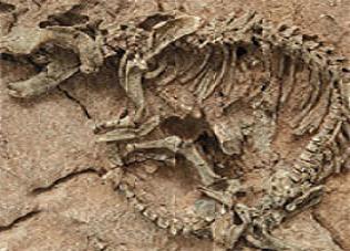En ilkel dört ayaklının fosili bulundu.20812