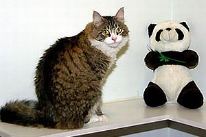 CHP'nin kedisi