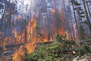 3 bin hektar, şişe kırıkları yüzünden yandı.20627