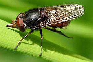 Ölü sinekleri yedi zehirlendi.14708