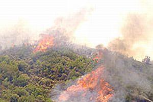 Manavgat'taki yangın kısmen kontrol altında.11517