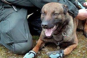 Ergenekon'a köpek saldırısı: 9 yaralı.16380