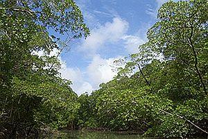 Amazon ormanlarındaki kayıplar artıyor.27308