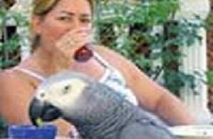 Papağanı bulana 20 bin YTL ödül!.11208