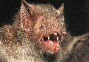 Vampir yarasalar 38 kişiyi öldürdü.12712