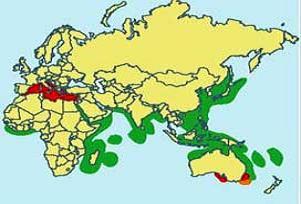 Katil yosun Akdeniz'de hızla yayılıyor!.15161