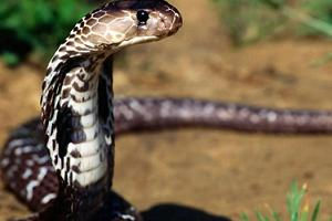 Bu evde yaşayanların başı yılanlarla dertte.11180