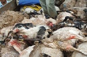 Ölü hayvanlarla yaşayan genç kurtarıldı.16098