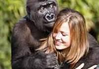 King Kong Kera'nın aşkı.6286