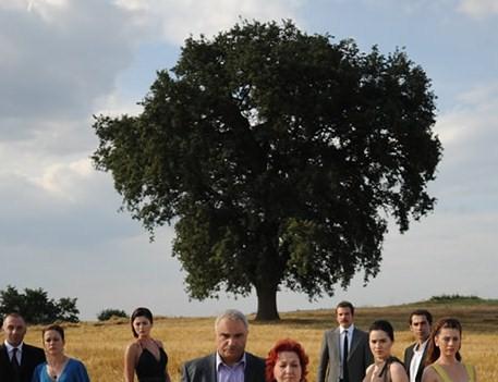 Bu ağaç şöhret oldu!.55149