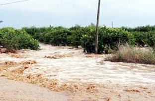Denizli'de tarım arazilerini sel bastı.13917