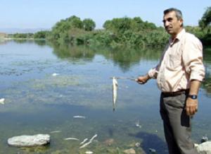 Toplu balık ölümleri mercek altında.11708
