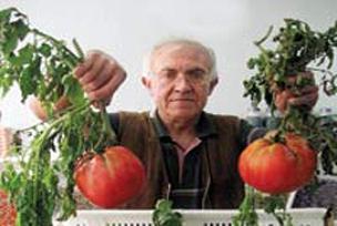 İsrail'i domates tohumuyla vuracak.30690