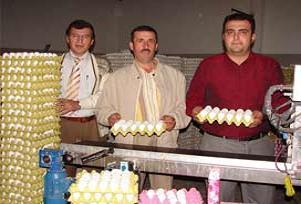 Yumurtacılar ihracat rekoru kırıyor.15267