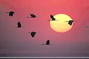 Göçmen kuşları Anadolu'ya küstürdük.6224